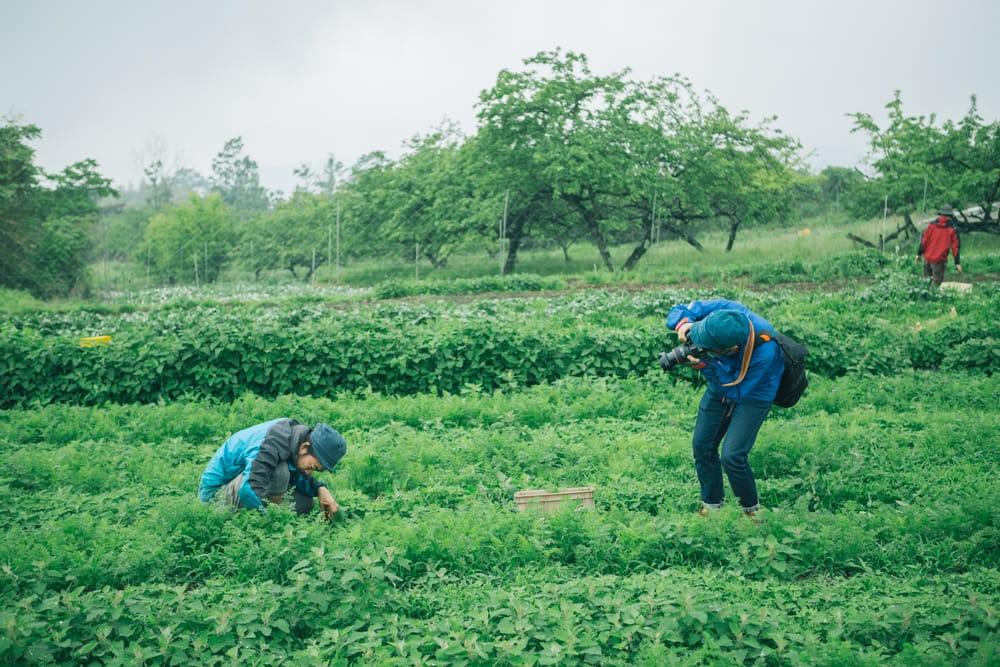 バイオダイナミック農法を実践する「マル神農園」の取材風景。撮影費は採れたての野菜との物々交換で。