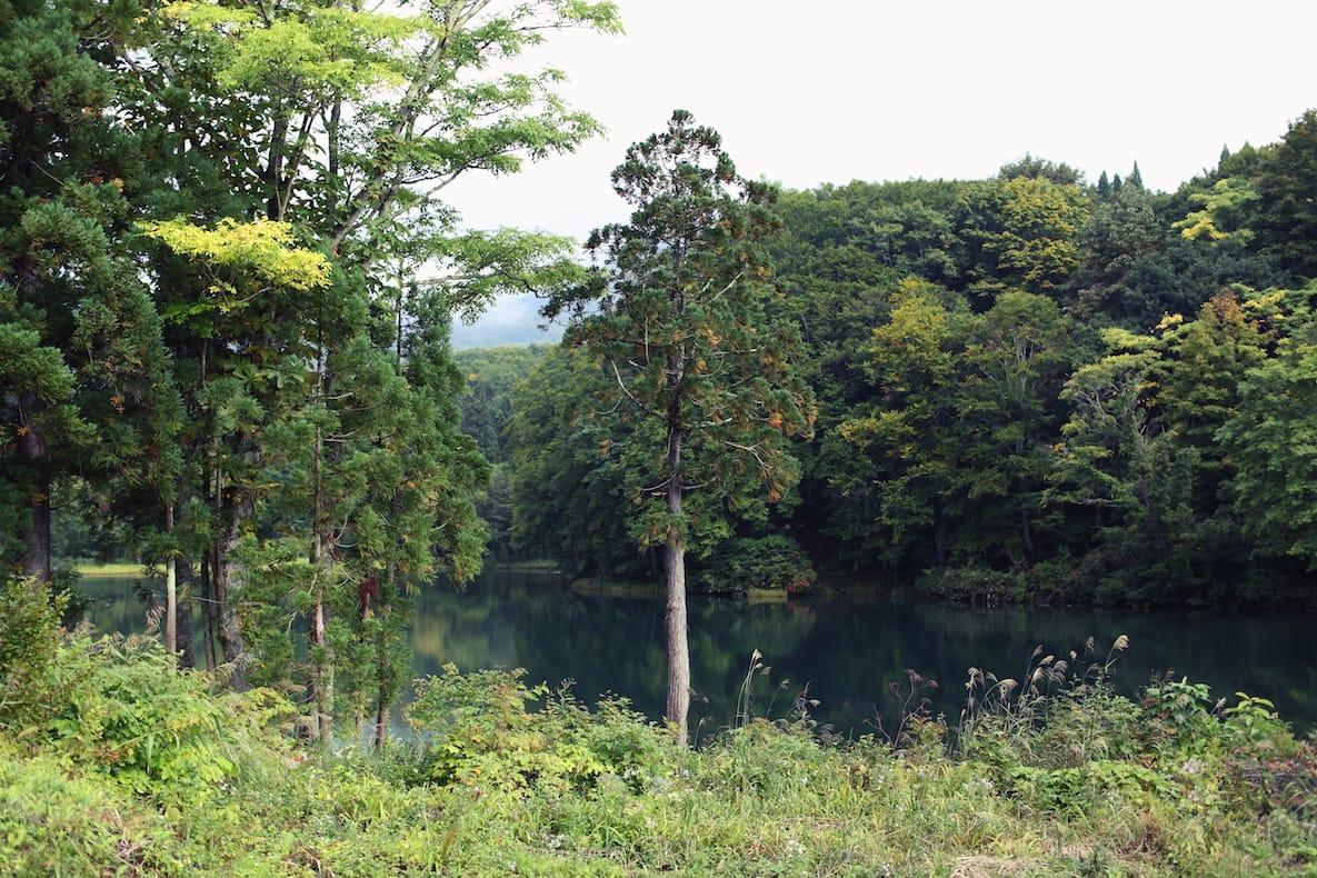静かで美しい晩秋の山の風景。山にはいろんな知恵や物語がいまも残る。だからこそ、絶やしてはいけないと坂本さんは考えている。