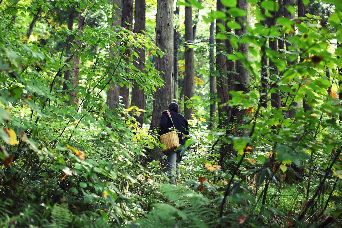 坂本さんは時間があれば、山に入る。カゴを肩から下げ、迷いなく、ずんずんと奥へと分け入って行く。自分で作った小屋で仕事をすることも。