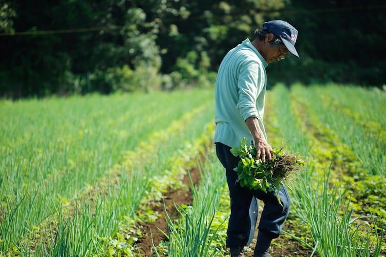雲仙で種採り農家を営む岩崎政利さん。個性豊かな在来種・固定種の野菜を、長い時間をかけて育ててきた。