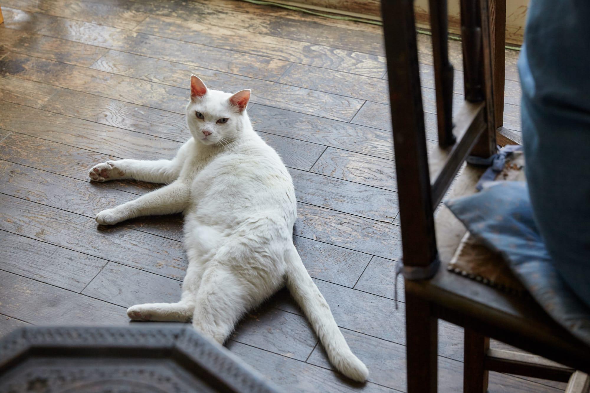 写真上:「マダム」こと、山川陽子さん。写真下:山川家では13匹の猫を飼っている。他の家の猫が紛れ込んでくることもあるのだとか。
