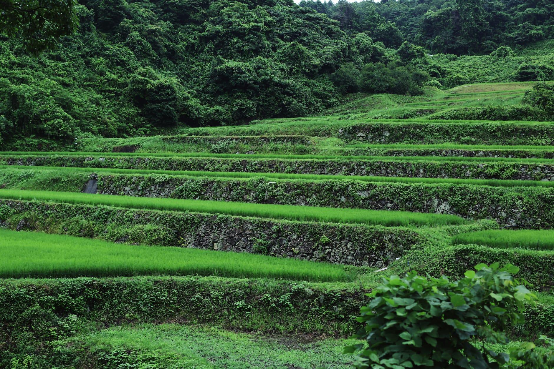 石垣が今も残る大張沢尻棚田は、日本棚田百選にも選ばれた。