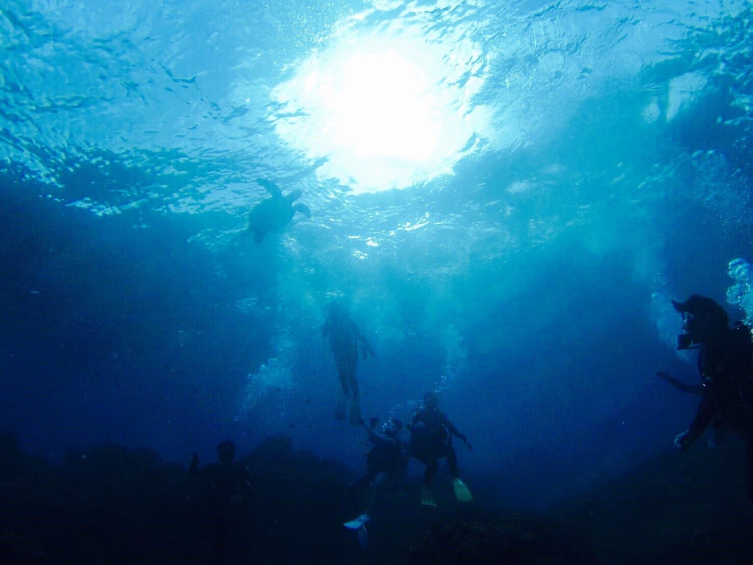 羽田から飛行機で45分で行くことができる、八丈島では、ウミガメに出会うことができる。