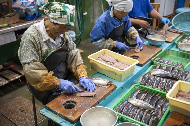 くさやの原料となる魚は、青むろあじ、トビウオ、サバ、サメなど。見学させてもらった池太商店ではこの日、青ムロアジのたたきを作っていた。