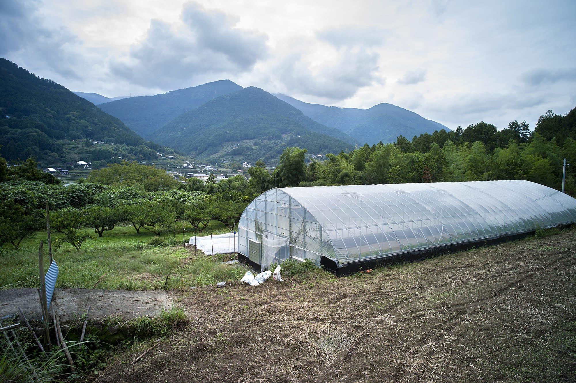 フードハブ・プロジェクト「育てる部門(農業チーム)」と神山町役場が連携して行う実証実験「石がけハ ウス」。神山特有の地形を利用し、石による蓄熱をビニールハウスに利用する試みです。