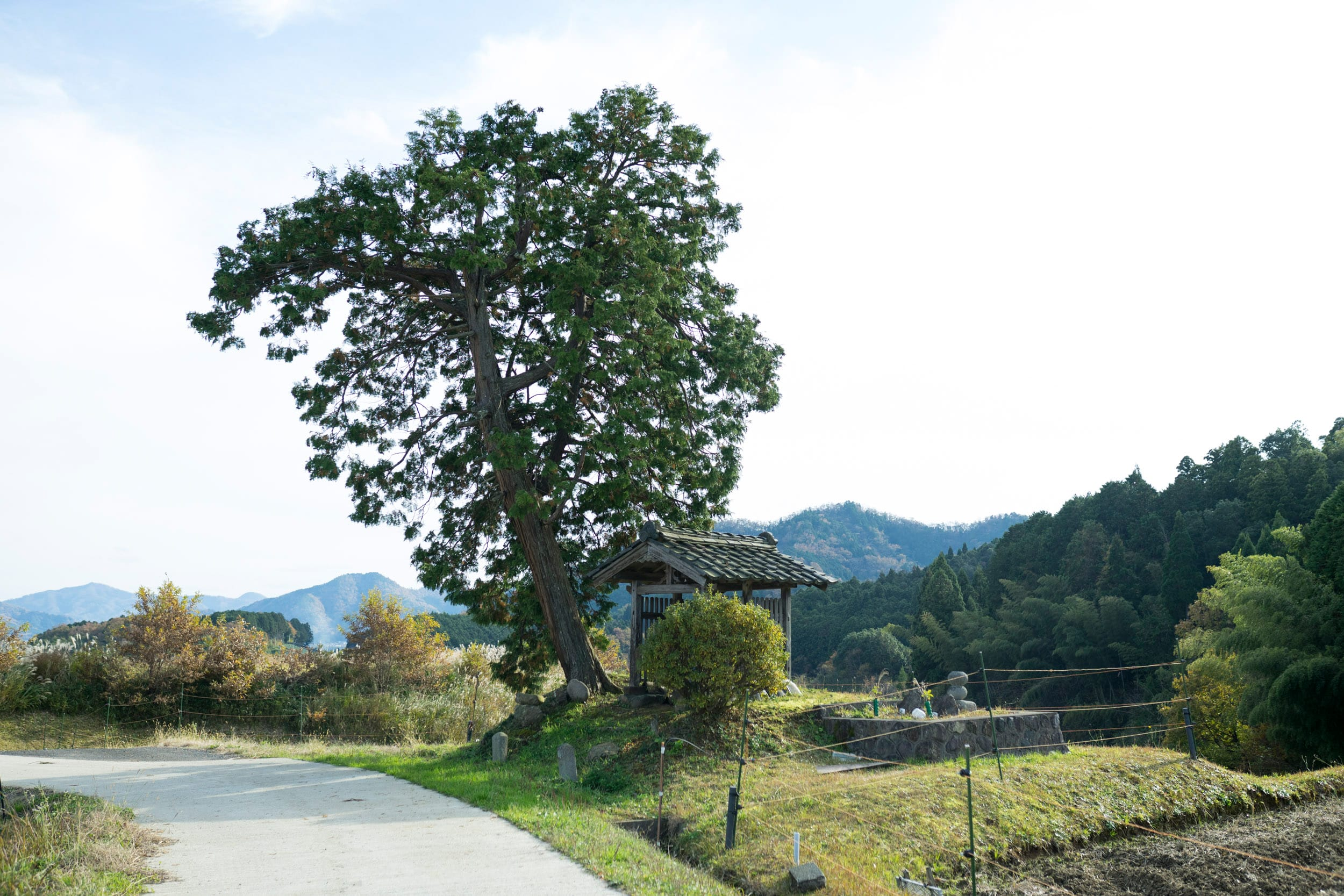 お地蔵さんと一本ヒノキ。この丘につづく道を歩いていると清々しい気持ちになります。
