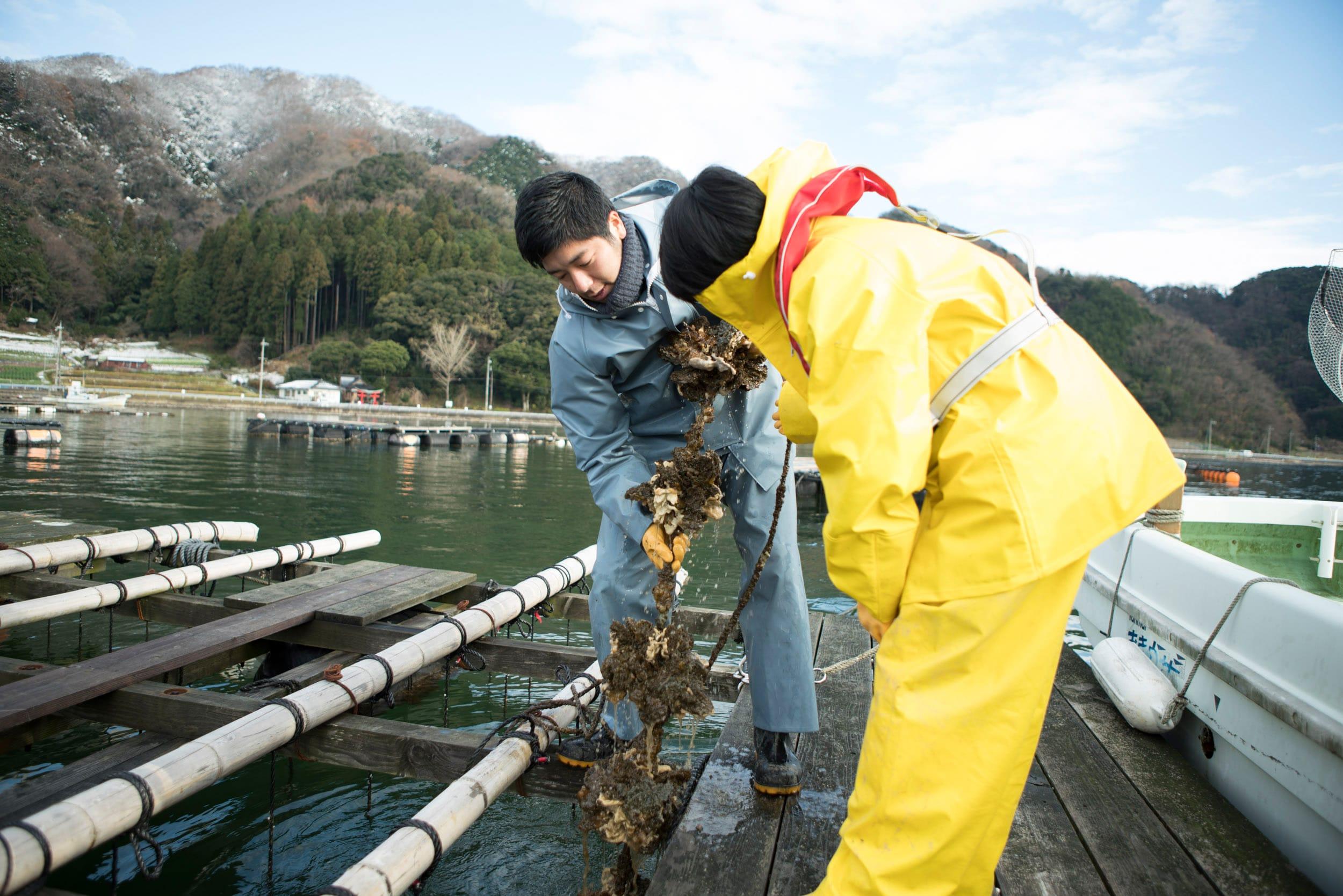 筏には牡蠣の稚貝をつけたロープが吊られている。牡蠣の周りにホヤやムール貝、小さなエビやカニ、魚も住みついている。まるで小さな生態系だ。