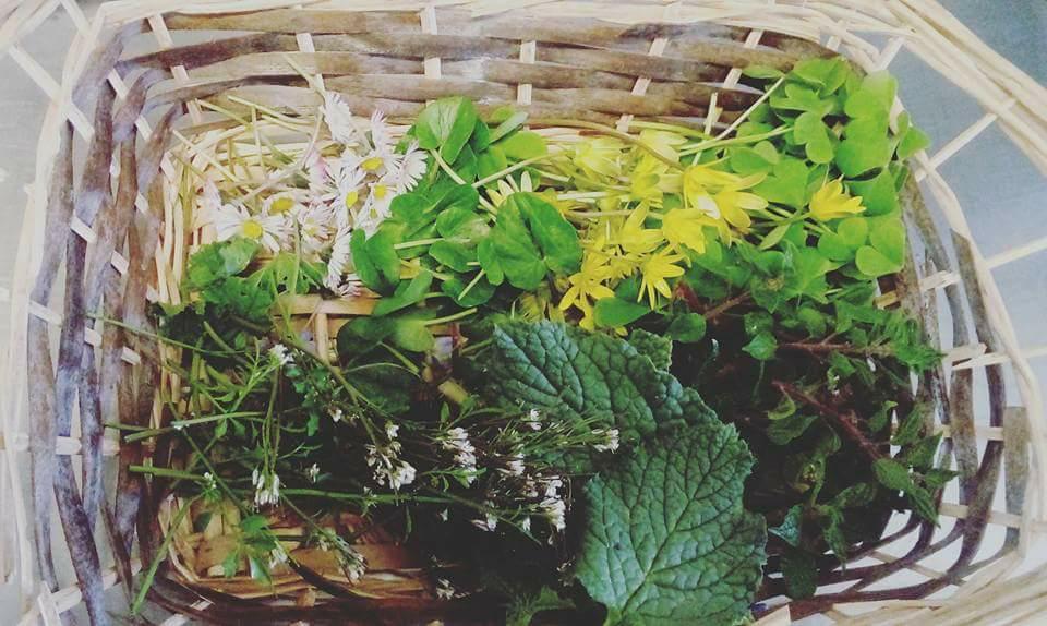 川本さんが摘んで料理していたイタリアの野草たち(川本さん提供)。