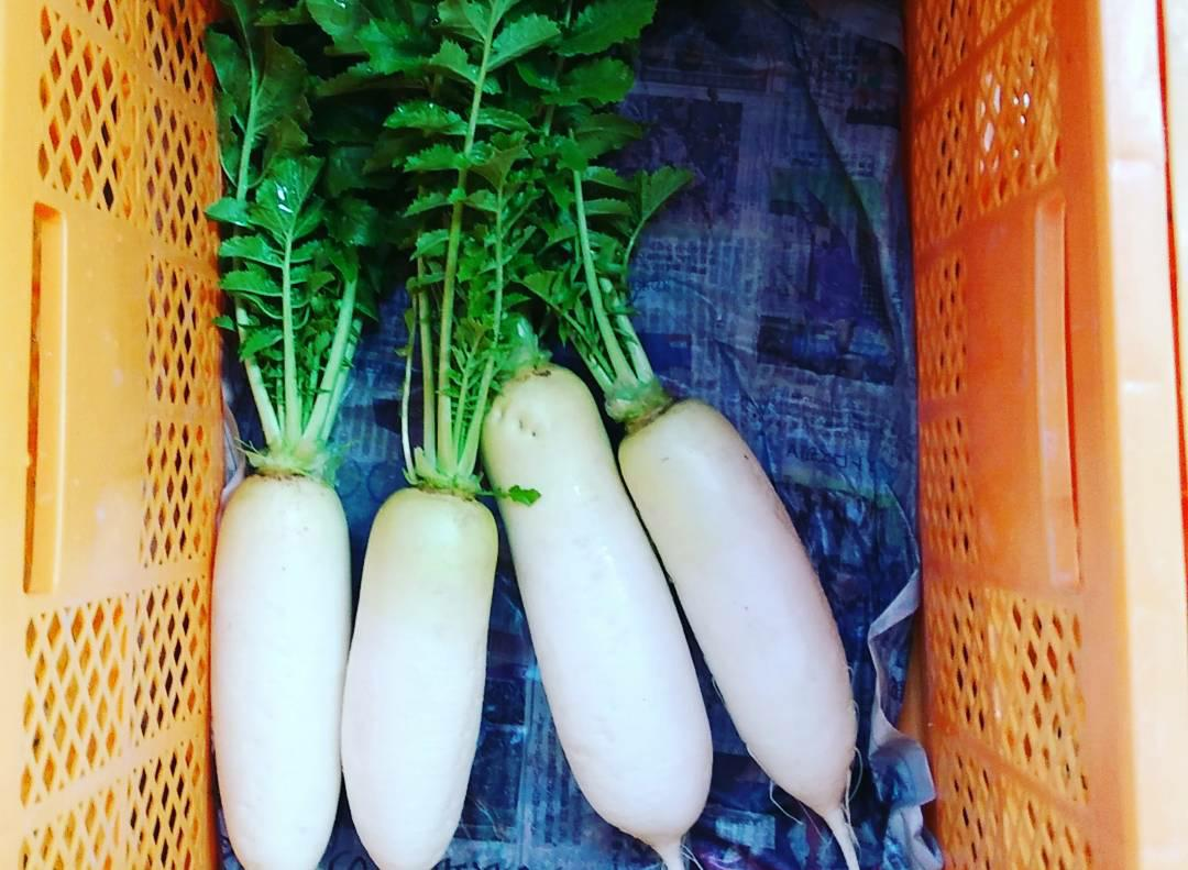 フードハブ・プロジェクトの畑で採れた野菜たち(川本さん撮影)