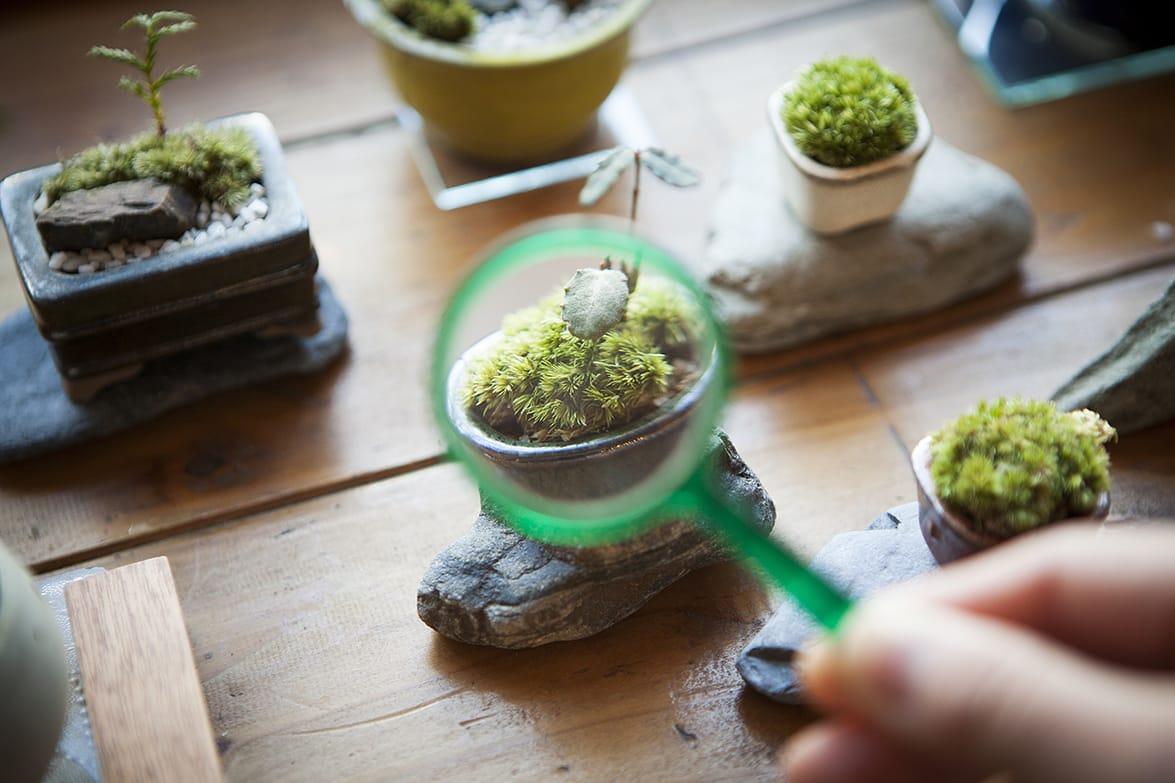 見つめれば見つめるほどに、目が離せなくなる苔の世界。ワークショップは随時開催、1700円〜。