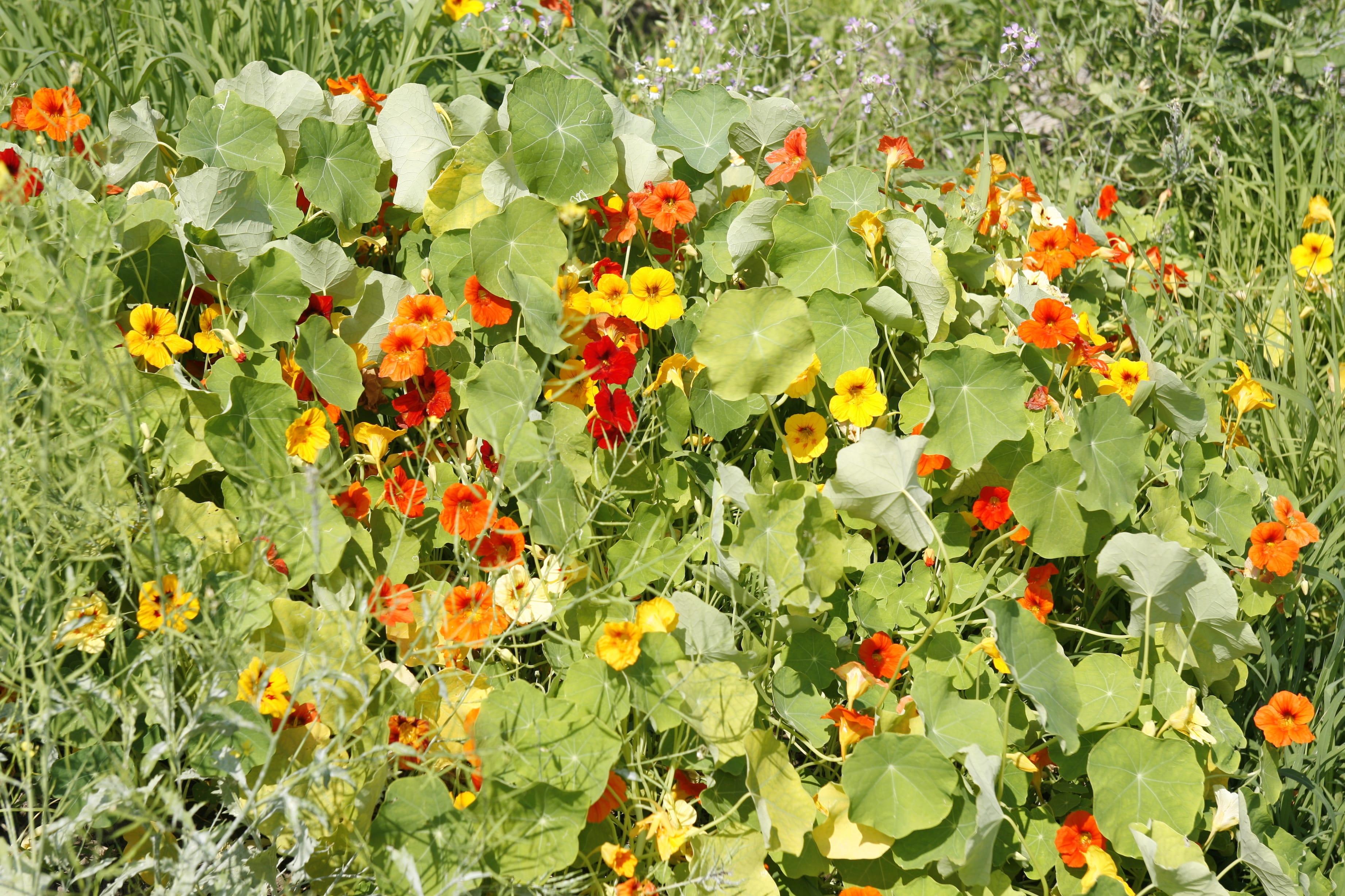 05_佐渡の畑で咲いていた植物
