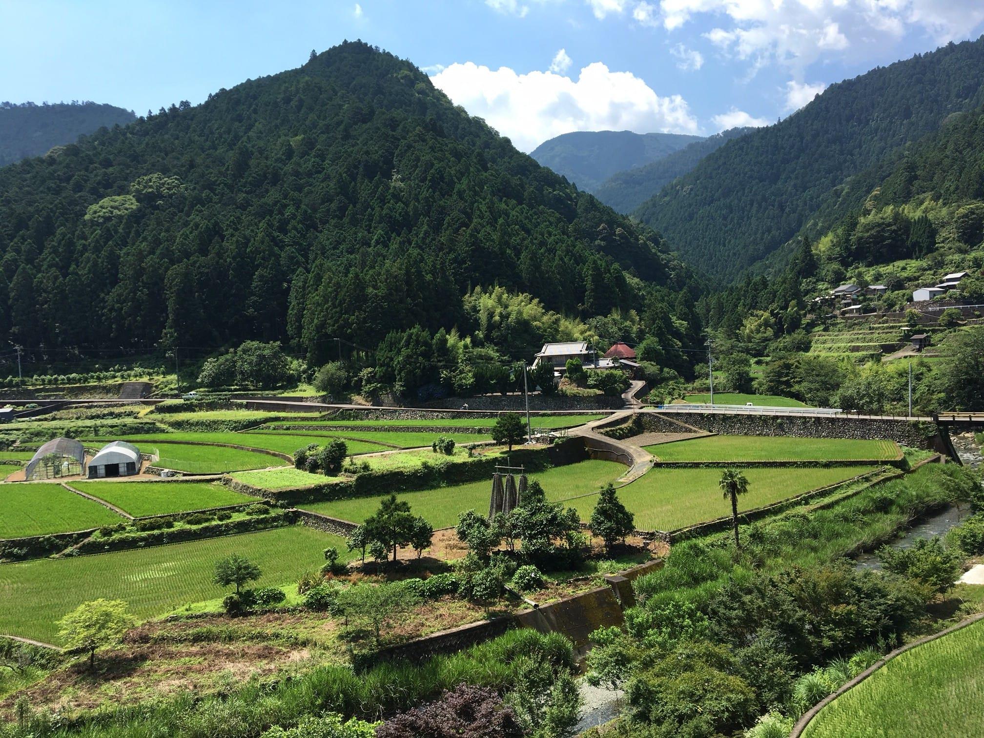 山間にひろがる棚田の風景も、神山の顔のひとつ。