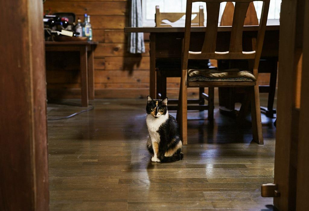 笑顔で迎えてくれた元井夫妻。愛猫のカエデちゃんも一緒に。