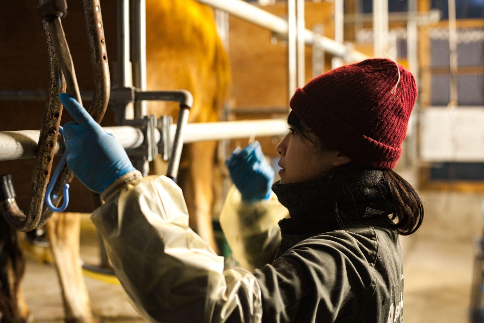日本のほとんどの牧場が、牛舎で牛を育てているため、自然放牧をしている八丈島乳業には、全国から働き手の応募がある。全国の酪農家の平均年齢が55.1歳なのに対して、八丈島乳業の牧場スタッフは36.2歳。若い!