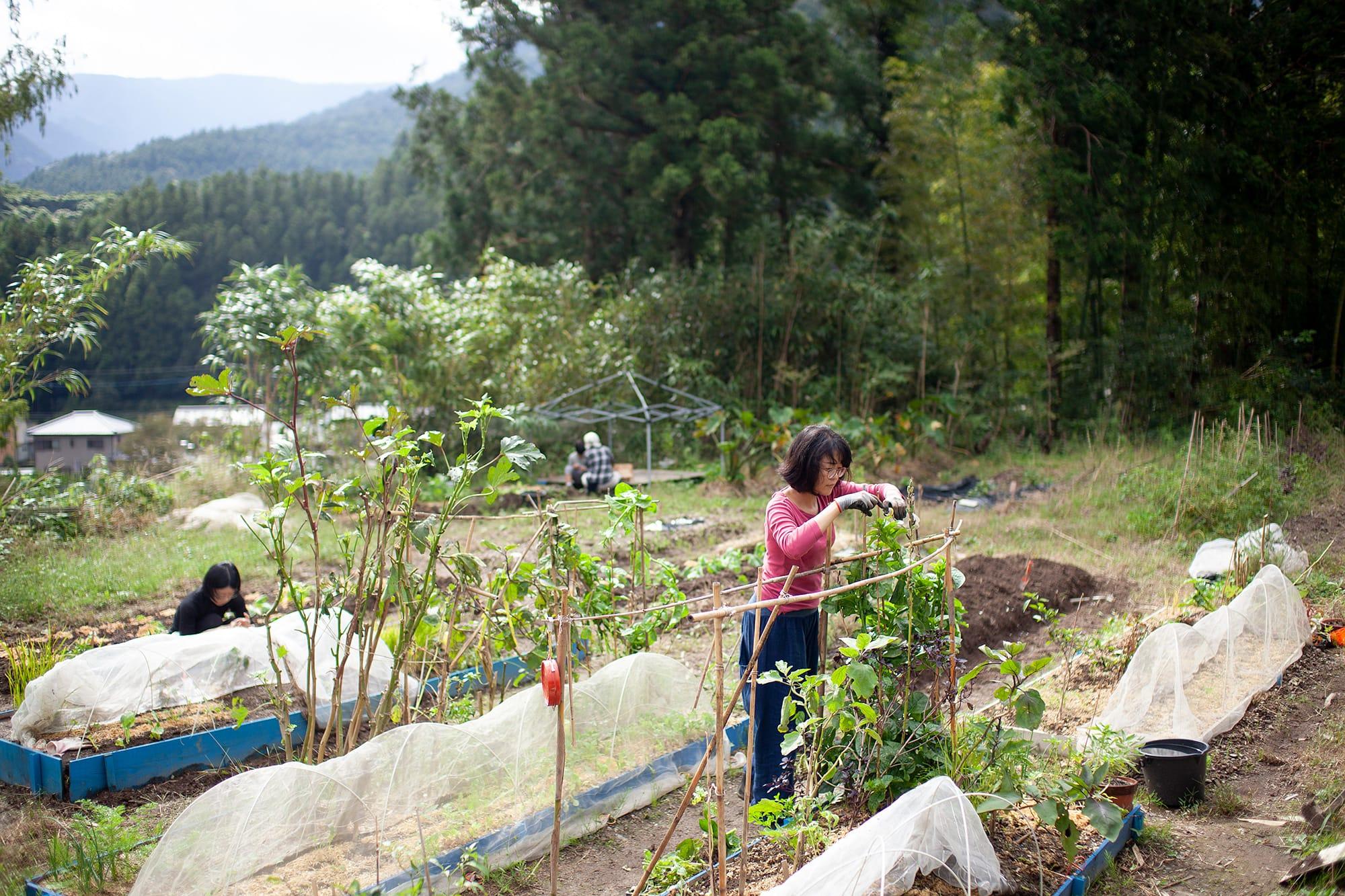 「ノラ上手」のみなさんが野菜を育てている菜園